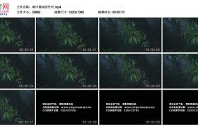 高清实拍视频素材丨雨中摆动的竹叶 雨打竹叶