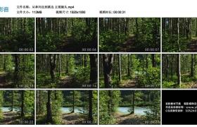 高清实拍视频丨从林间走到溪边 主观镜头