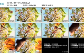 【高清实拍素材】晴空中秋叶从树上飘落