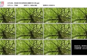 高清实拍视频素材丨仰拍春天阳光照射着长满嫩叶的大树