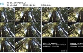 【高清实拍素材】森林中仰拍大树